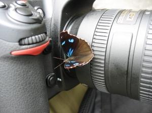 BflyOnCamera