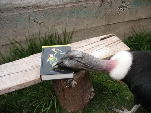 Andean Condor review